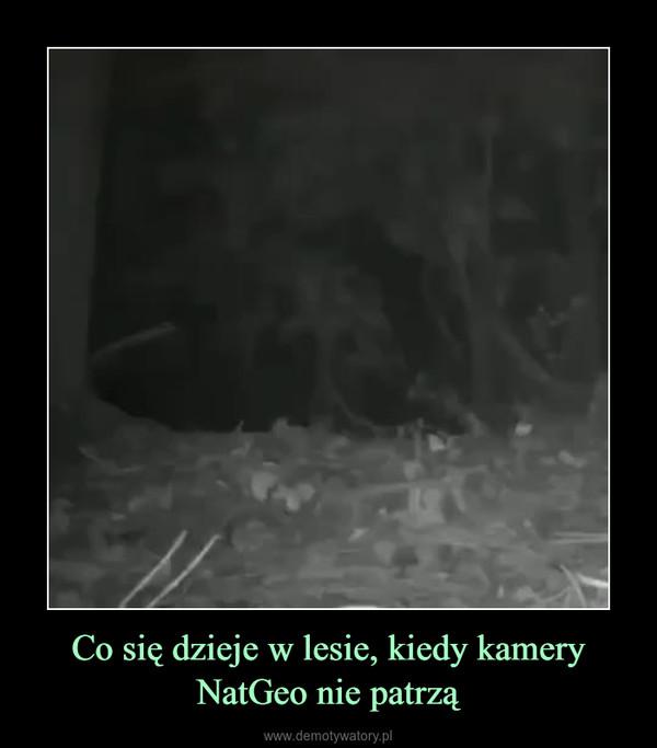 Co się dzieje w lesie, kiedy kamery NatGeo nie patrzą –