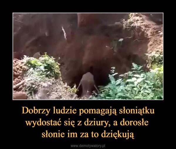 Dobrzy ludzie pomagają słoniątku wydostać się z dziury, a dorosłe słonie im za to dziękują –
