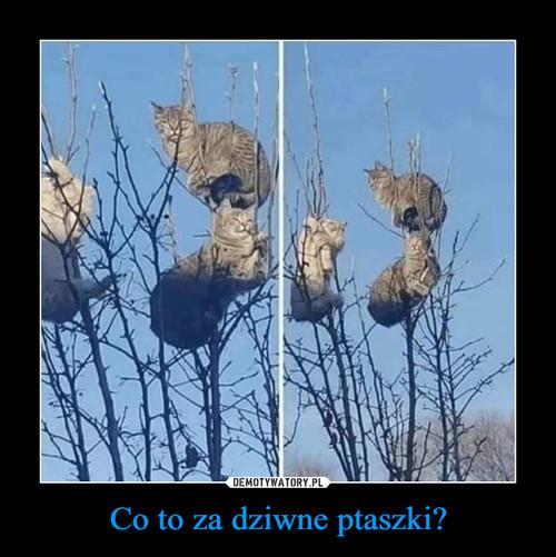 Co to za dziwne ptaszki?