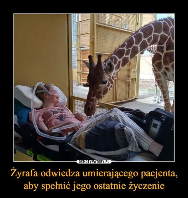 Żyrafa odwiedza umierającego pacjenta, aby spełnić jego ostatnie życzenie –