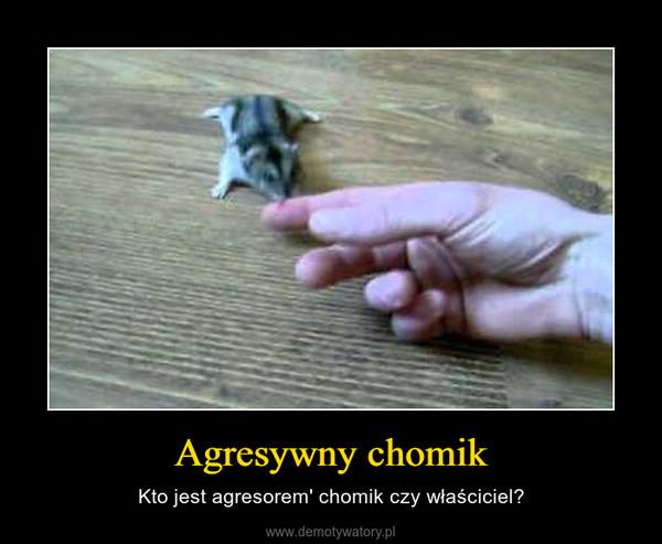 Agresywny chomik – Kto jest agresorem' chomik czy właściciel?