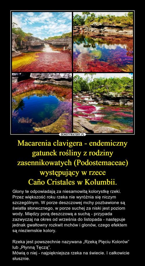 Macarenia clavigera - endemiczny gatunek rośliny z rodziny zasennikowatych (Podostemaceae) występujący w rzece Caño Cristales w Kolumbii.