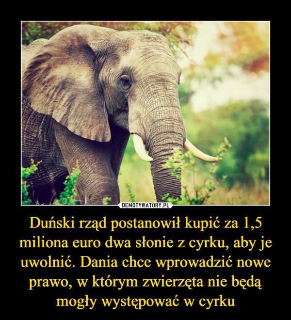 Duński rząd postanowił kupić za 1,5 miliona euro dwa słonie z cyrku, aby je uwolnić. Dania chce wprowadzić nowe prawo, w którym zwierzęta nie będą mogły występować w cyrku –