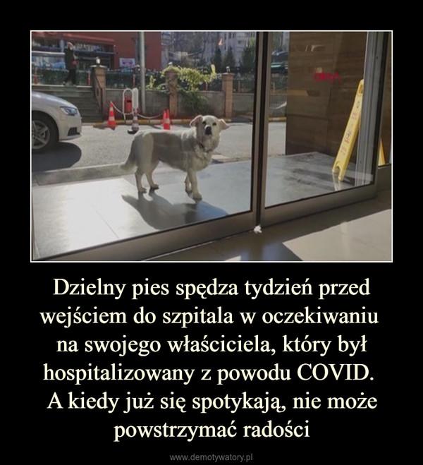 Dzielny pies spędza tydzień przed wejściem do szpitala w oczekiwaniu na swojego właściciela, który był hospitalizowany z powodu COVID. A kiedy już się spotykają, nie może powstrzymać radości –