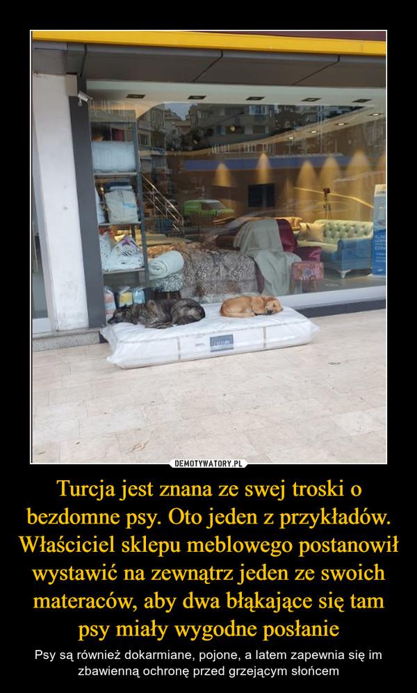 Turcja jest znana ze swej troski o bezdomne psy. Oto jeden z przykładów. Właściciel sklepu meblowego postanowił wystawić na zewnątrz jeden ze swoich materaców, aby dwa błąkające się tam psy miały wygodne posłanie – Psy są również dokarmiane, pojone, a latem zapewnia się im zbawienną ochronę przed grzejącym słońcem