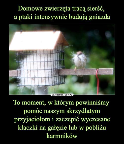 Domowe zwierzęta tracą sierść,  a ptaki intensywnie budują gniazda To moment, w którym powinniśmy  pomóc naszym skrzydlatym przyjaciołom i zaczepić wyczesane kłaczki na gałęzie lub w pobliżu karmników