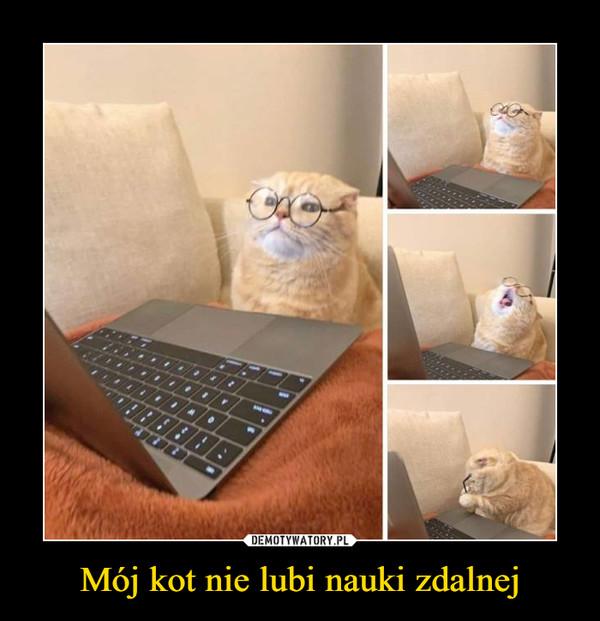 Mój kot nie lubi nauki zdalnej –