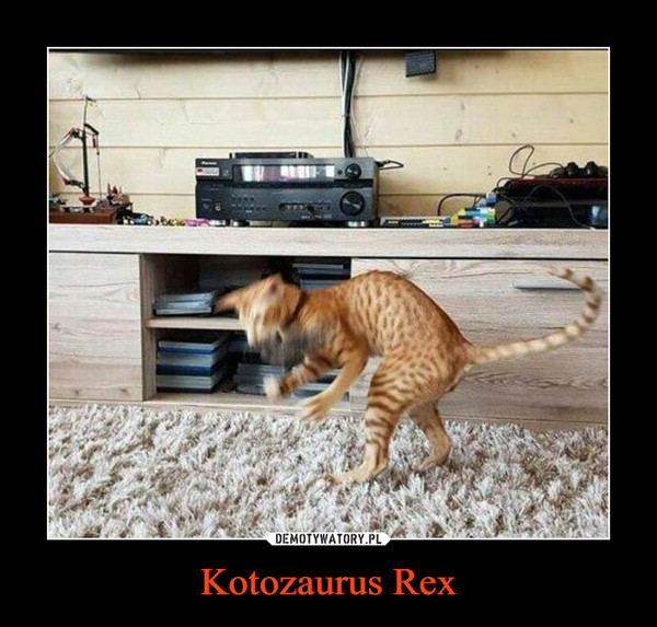 Kotozaurus Rex –