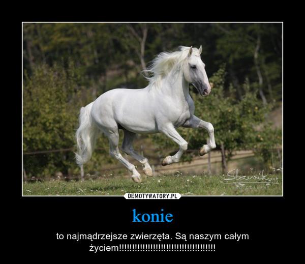 konie – to najmądrzejsze zwierzęta. Są naszym całym życiem!!!!!!!!!!!!!!!!!!!!!!!!!!!!!!!!!!!!!