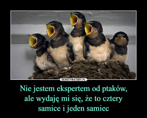 Nie jestem ekspertem od ptaków,ale wydaję mi się, że to czterysamice i jeden samiec –