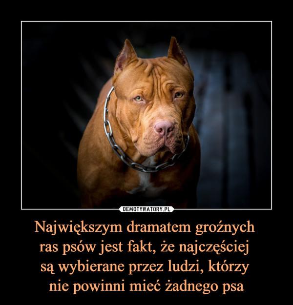 Największym dramatem groźnych ras psów jest fakt, że najczęściej są wybierane przez ludzi, którzy nie powinni mieć żadnego psa –