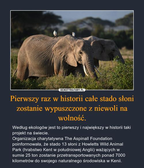 Pierwszy raz w historii całe stado słoni zostanie wypuszczone z niewoli na wolność.