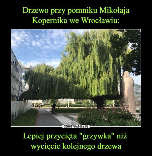 """Drzewo przy pomniku Mikołaja Kopernika we Wrocławiu: Lepiej przycięta """"grzywka"""" niż  wycięcie kolejnego drzewa"""