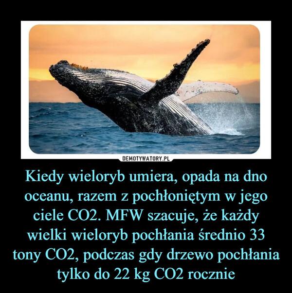 Kiedy wieloryb umiera, opada na dno oceanu, razem z pochłoniętym w jego ciele CO2. MFW szacuje, że każdy wielki wieloryb pochłania średnio 33 tony CO2, podczas gdy drzewo pochłania tylko do 22 kg CO2 rocznie –