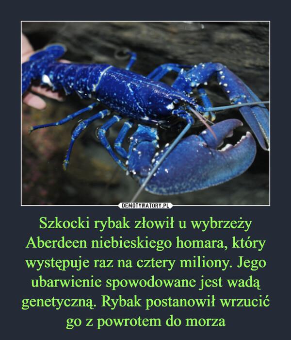 Szkocki rybak złowił u wybrzeży Aberdeen niebieskiego homara, który występuje raz na cztery miliony. Jego ubarwienie spowodowane jest wadą genetyczną. Rybak postanowił wrzucić go z powrotem do morza