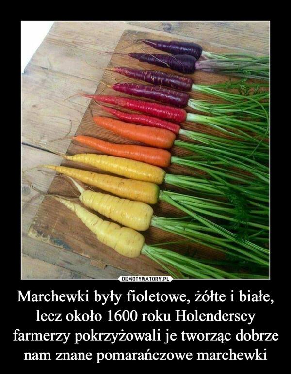 Marchewki były fioletowe, żółte i białe, lecz około 1600 roku Holenderscy farmerzy pokrzyżowali je tworząc dobrze nam znane pomarańczowe marchewki –