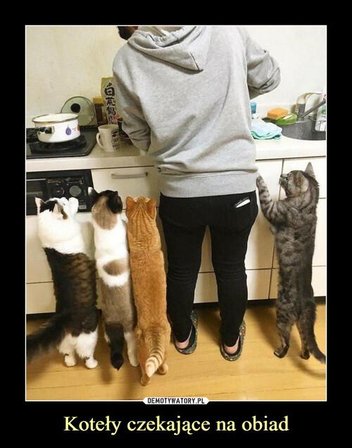 Koteły czekające na obiad