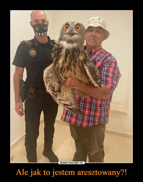 Ale jak to jestem aresztowany?!