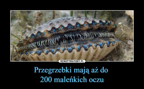 Przegrzebki mają aż do  200 maleńkich oczu